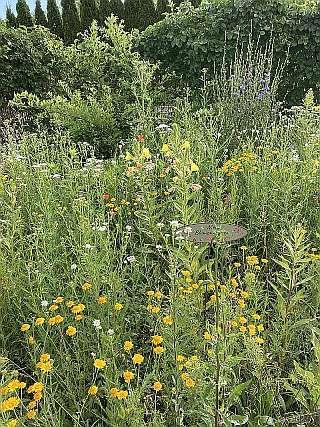 Schöne Bienenweide im Garten