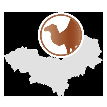 Kamelhaar aus der Mongolei