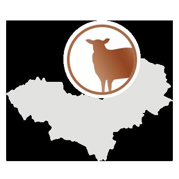 Schafwolle aus der Mongolei