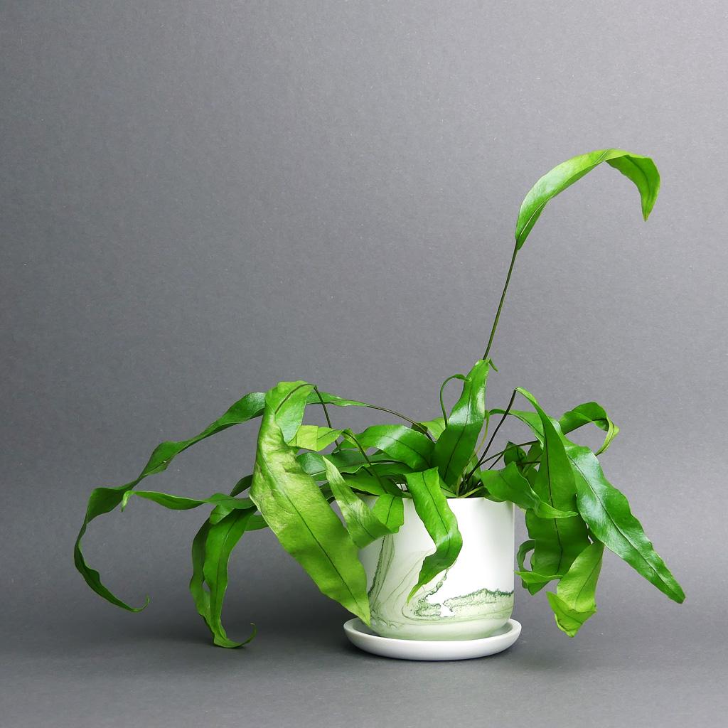 Anna Badur Keramik kaufen Berlin - The Botanical Room - plant shop berlin design ceramic