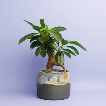 JAK Keramik kaufen Berlin - The Botanical Room - plant shop Berlin design ceramic urban jungle