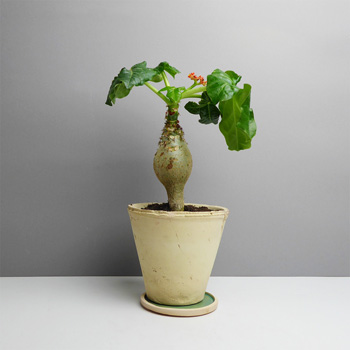 KhashKhash Keramik kaufen Berlin - The Botanical Room - plant shop Berlin design ceramic urban jungle