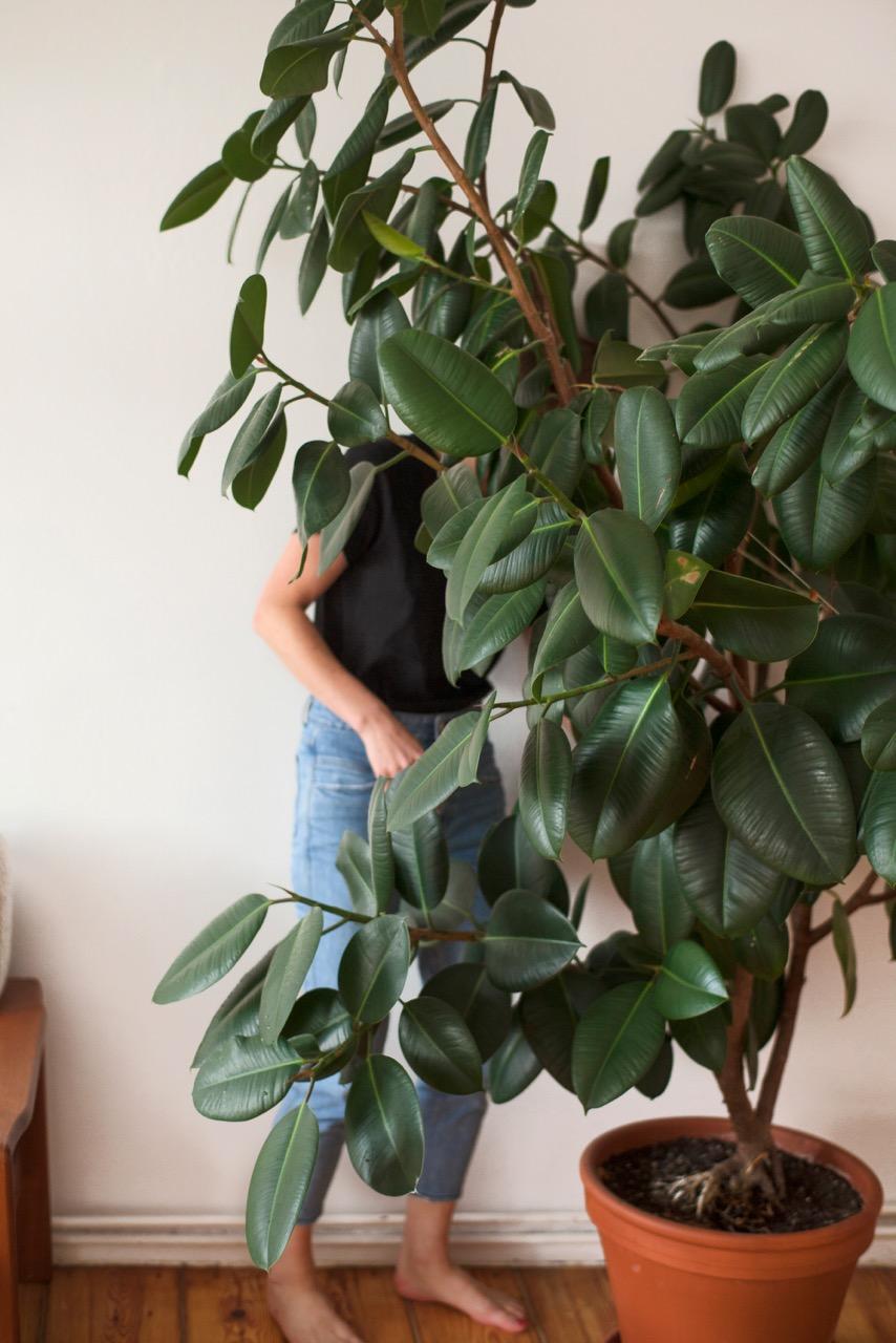 Plants-Are-Friends_Anika-Paulus-05.jpeg