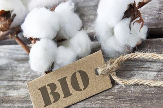 bio-baumwolle-2_595.png